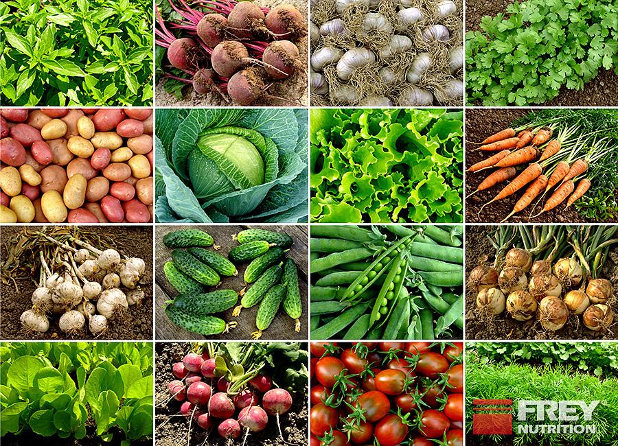 Enthält Gemüse negative Kalorien?
