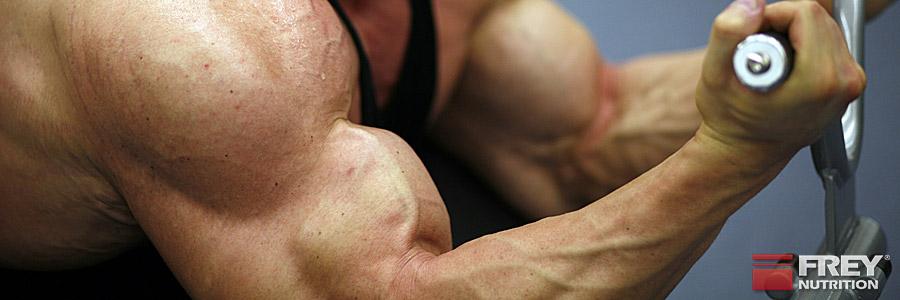 Mehr Muskeln ohne Fleisch