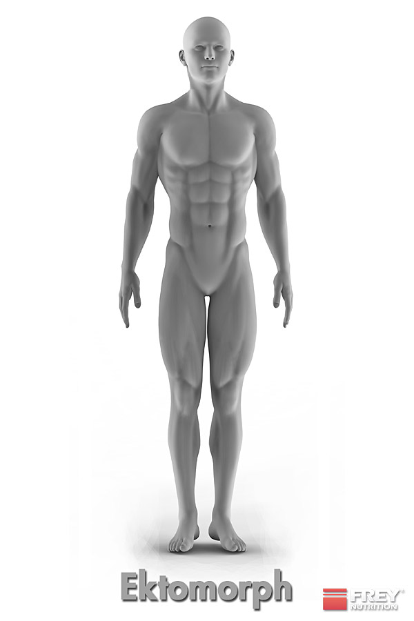 Der ektomorphe Körpertyp