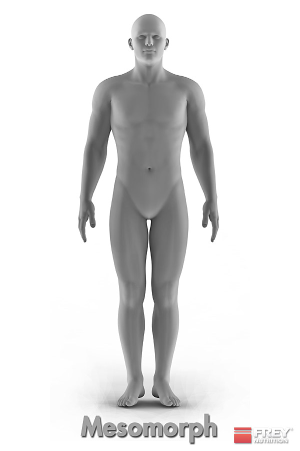 Der mesomorphe Körpertyp