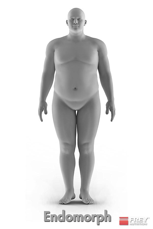 Der endomorphe Körpertyp