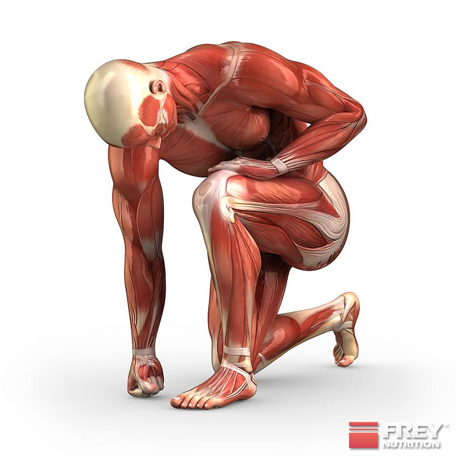 Beide Muskelfasertypen werden beansprucht