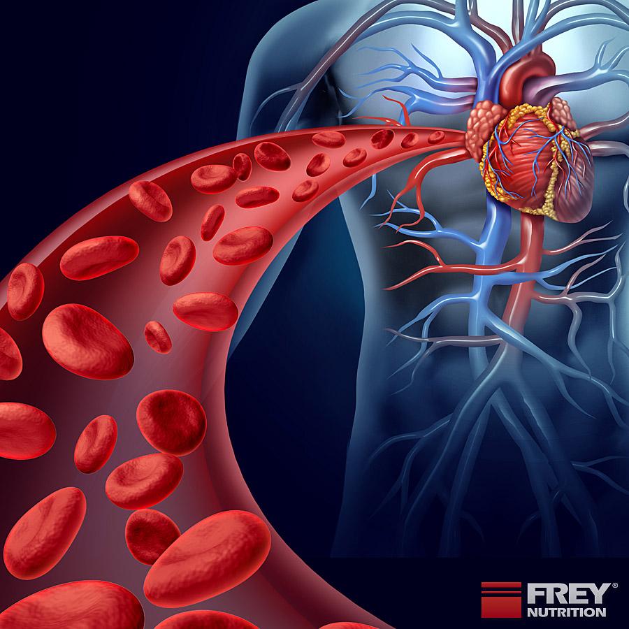 L-Carnitin für die Sauerstoffaufnahme des Herzens